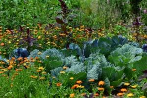 自宅の庭を家庭菜園に!初心者向け家庭菜園の作り方
